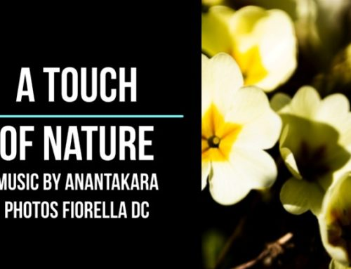 video-clip; A Touch Of Nature